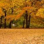 Minnesota Weather Conditions that Impact Fall Colors